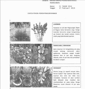 tanaman nyamuk 1