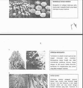 tanaman nyamuk 2