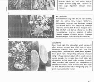 tanaman nyamuk 3