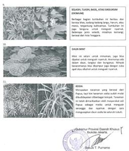 tanaman nyamuk 4