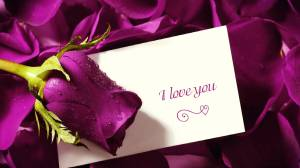purple-rose-with-love-letter-wallpaper